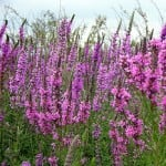 A energia das cores lilás e violeta