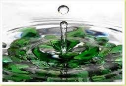 Banho de descarrego com ervas frescas para limpeza espiritual
