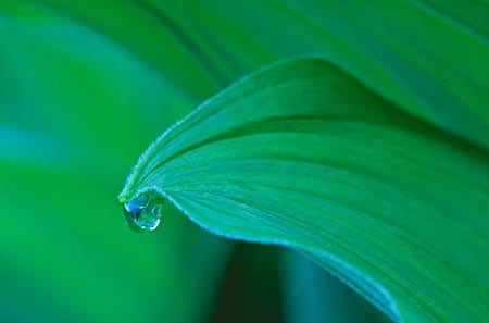 7 ervas sagradas candomblé