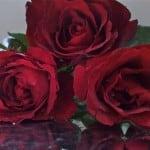 Aproveite a lua cheia e amarre seu amor com a Pombagira