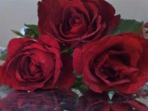 Rosas vermelhas são fundamentais para amarração amorosa