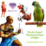 """""""Dia de Oxóssi – Rituais para boas energias"""
