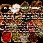 Os Orixás e suas plantas