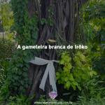 A gameleira branca de Irôko