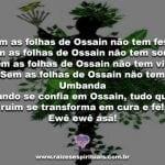 Que as folhas de Ossain nos tragam a cura do corpo e do espírito!