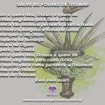 Que com as folhas de Ossain tenhamos a força dos Orixás conosco!