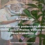 Arruda – uma das mais poderosas ervas usadas pelos Pretos Velhos em seus trabalhos