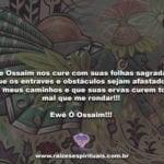 Que Ossaim nos curecom suas folhas sagradas! Ewê Ô Ossaim!!!