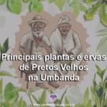Principais plantas e ervas de Pretos Velhos na Umbanda