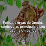 Folhas e ervas de Omulú: conheça as principais e seu uso na Umbanda