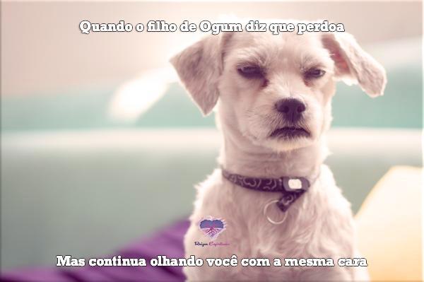 imagem de um cachorro com cara fechada com o texto Quando o filho de Ogum diz que perdoa, mas continua olhando você com a mesma cara