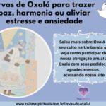Ervas de Oxalá para trazer paz, harmonia ou aliviar estresse e ansiedade