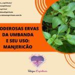 Manjericão – uma das mais poderosas e mais usadas ervas da umbanda